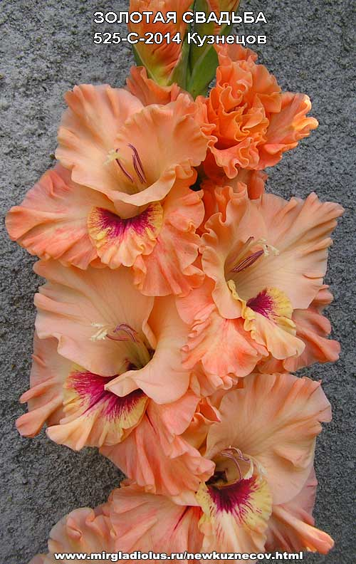 Букет нарцисс фото цветов