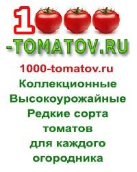 1000-tomatov.jpg