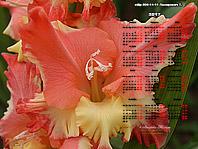 Календарь 2017 обои-ГЛАДИОЛУСЫ 1