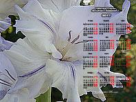 Календарь 2017 обои-3 ГЛАДИОЛУСЫ