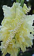 фото гладиолуса Лесная Красавица