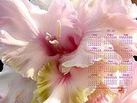 заставки-гладиолусы календарь 2010 года 1280х960