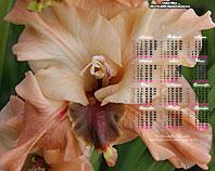 календарь-гладиолусы Сластёна