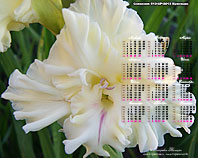 календарь-гладиолусы Славянка