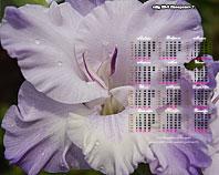 календарь-гладиолусы сеянец Х9-3 Лазаревич