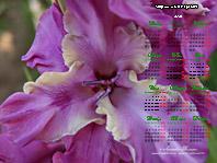 гладиолус sdlg 337-3-5 Лазаревич Т.