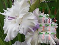 гладиолус sdlg Х9-10 Лазаревич Т.
